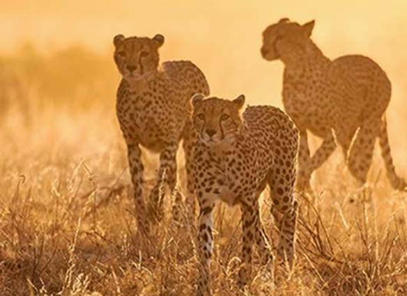 Botswana's Timeless Wilderness