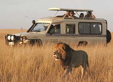 The Tanzania Spectacular Safari