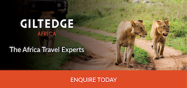 GiltedgeAfrica Africa Feb10-Feb23 Product